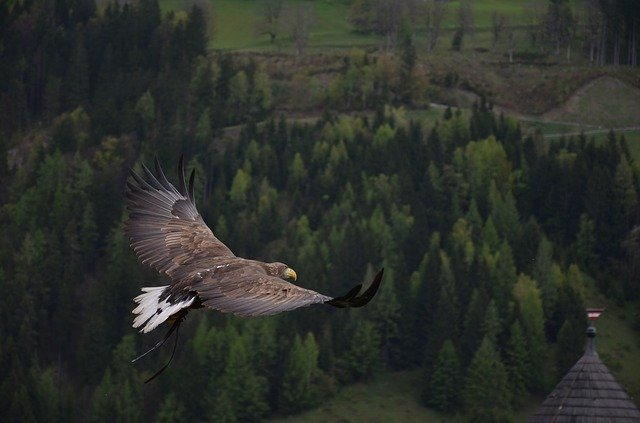 飛んでいる鳥